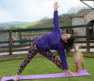 Enjoy yoga with the animals