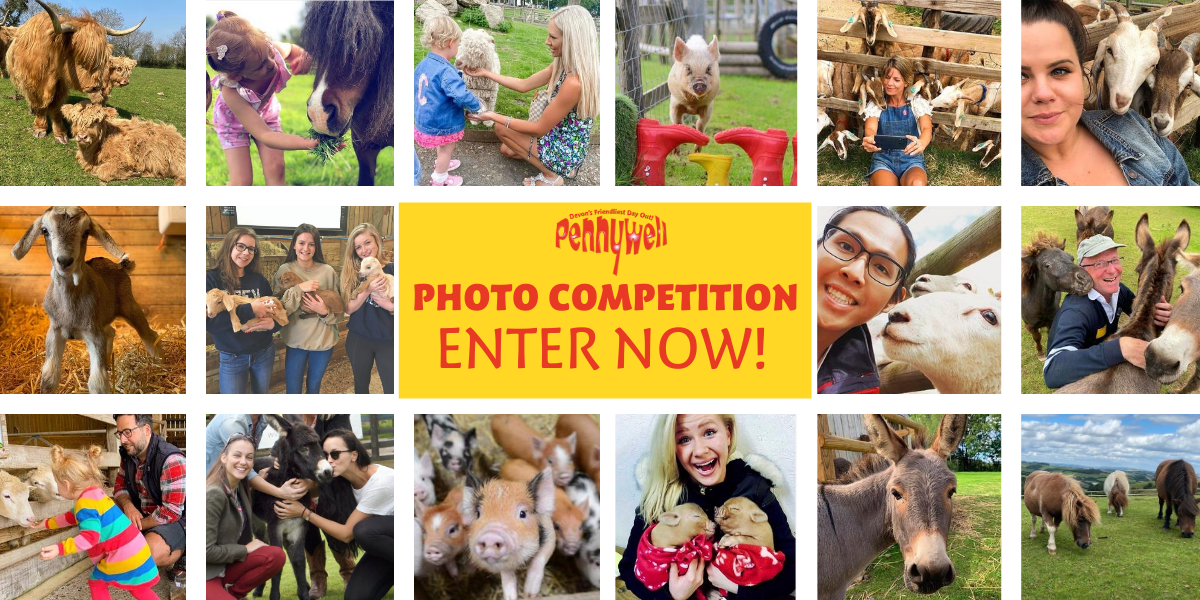 Pennywell Photo Competition