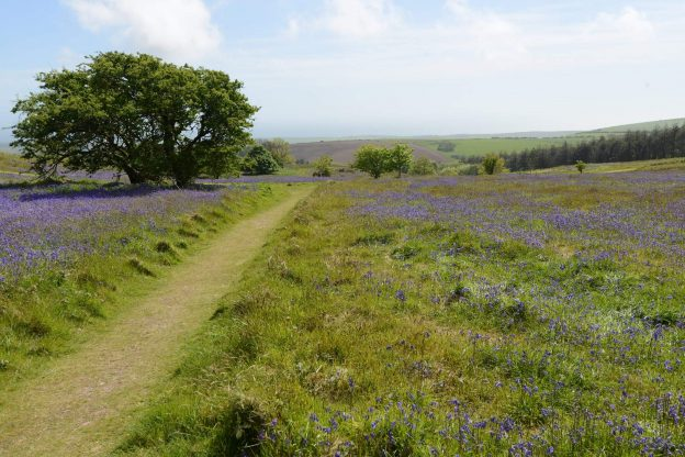 Trail path in Devon