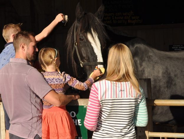 family grooming a horse