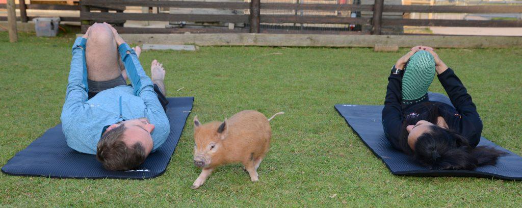 Piggy Pilates