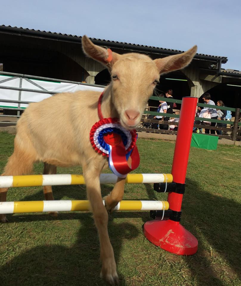 Gruffts, goats, pennywell farm