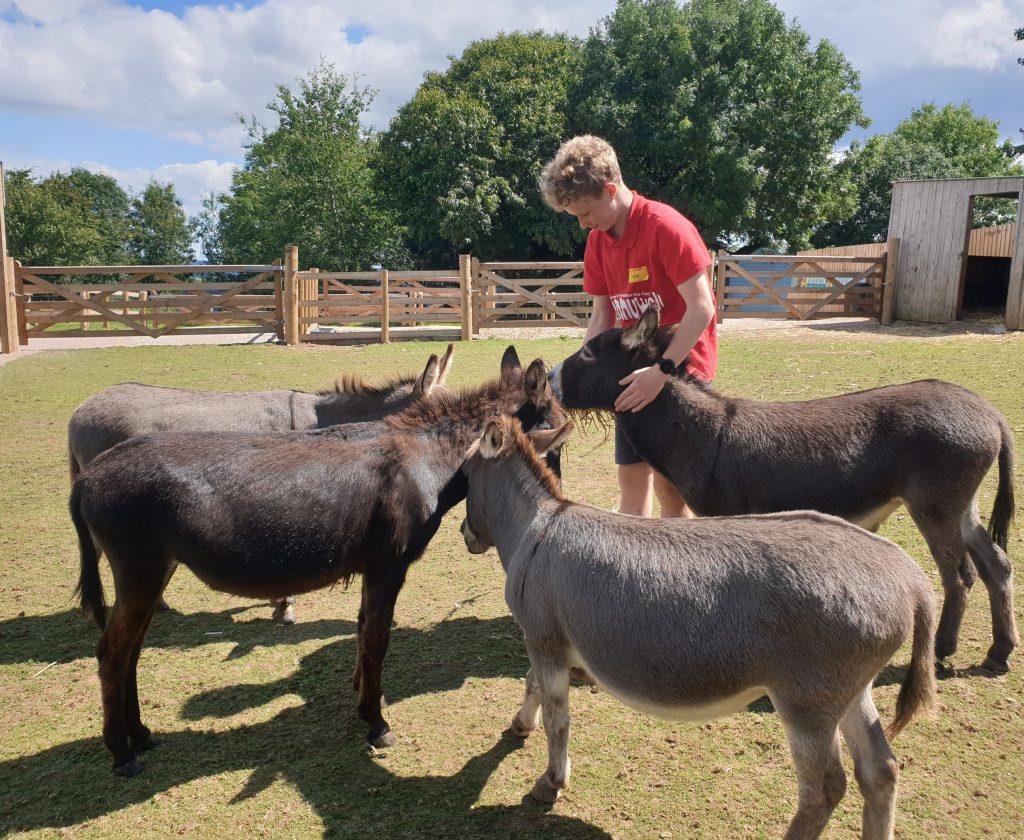 Miniature donkeys at Pennywell Farm