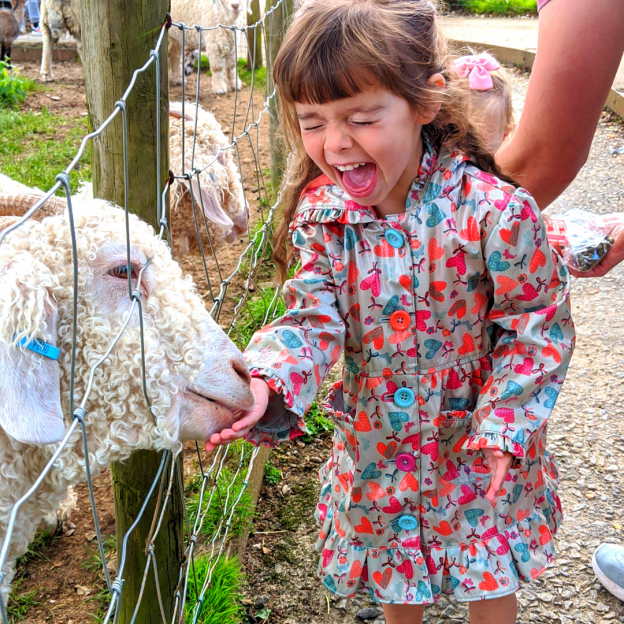 Goat Feeding at Pennywell Farm